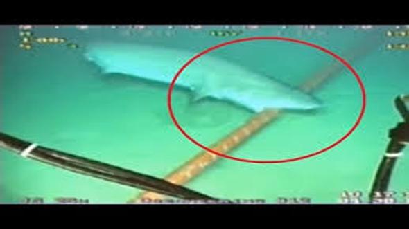 shark_attack_fiberoptic